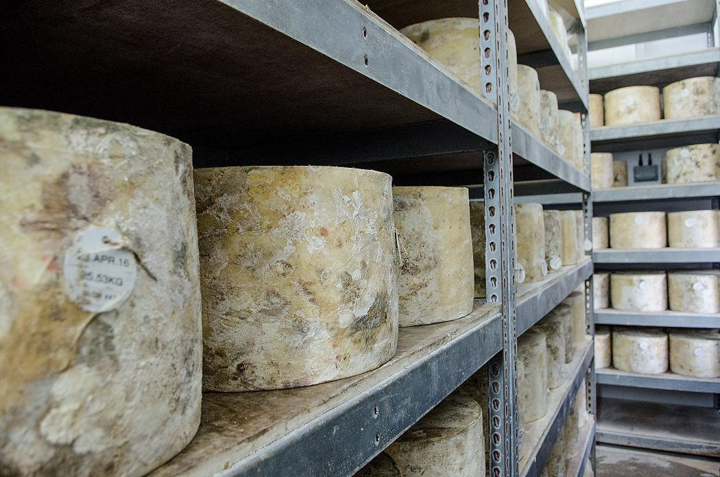 Cheddar Gorge Cheese Company Cheeses Maturing